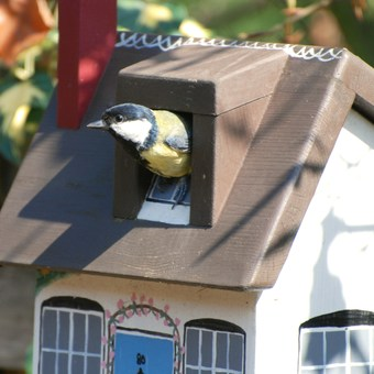 Blue Tit using a Lindleywood Cottage Bird Box