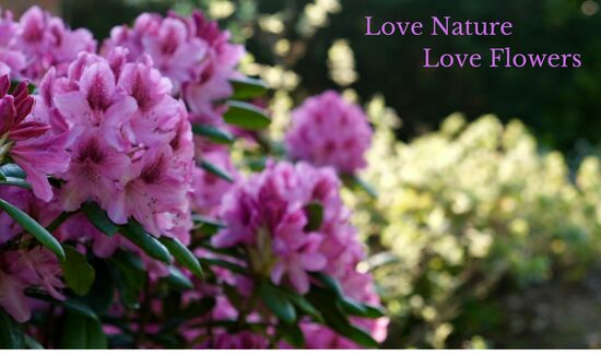 Love Nature Love Flowers