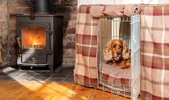 Cocker Spaniel sitting in our Mulberry Balmoral Crate Set