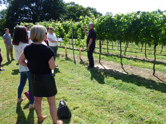 English Vineyard Tours