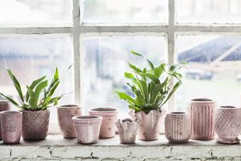 pink or green plant pots