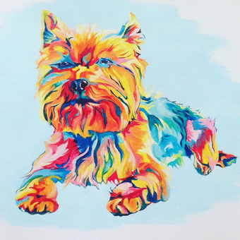 colourful bright multicoloured pet portraits yorkshires dogs