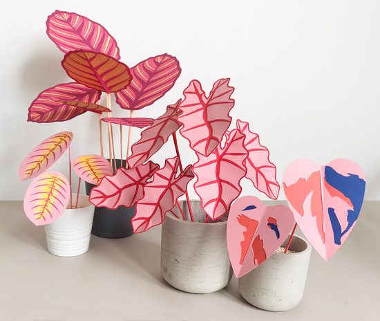 pink houseplants