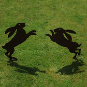 Two hares boxing in morning sun