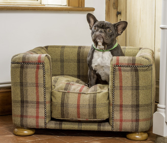 French Bulldog in a Tweed Dog Chesterfield Sofa - tweed dog bed by Lords and Labradors