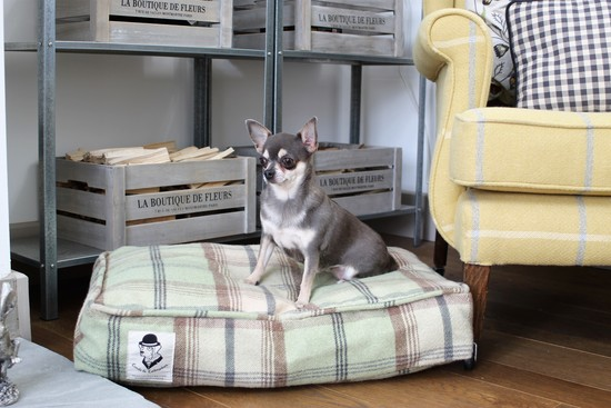 Chihuahua sitting on a tweed dog cushion by Lords and Labradors