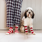 Dog & Owner Matching Candy Cane Socks