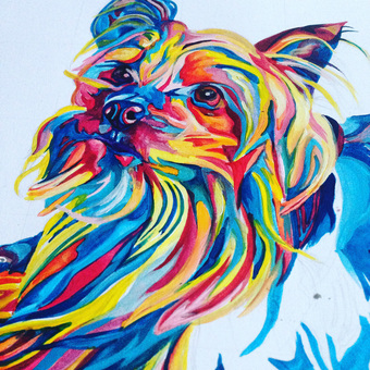 colourful bright multicoloured pet portraits