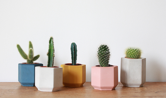 Coloured cactus plant pots