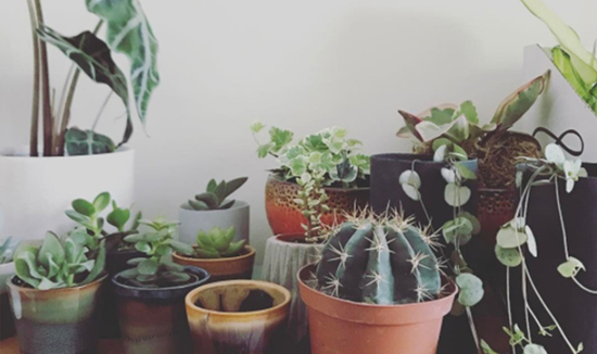 Gotta love a good plant shelfie!