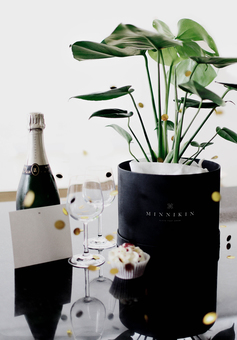 MINNIKIN plant gift being celebrated with a bottle of champagne