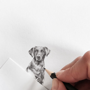 Labrador drawing