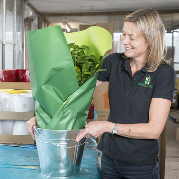 All our plants are carefully wrapped and boxed by hand at the nursery by people who love plants