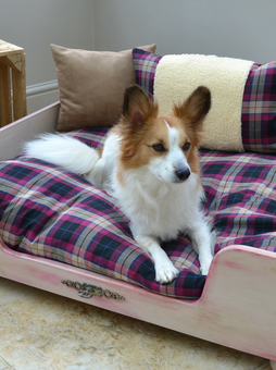 Cosy chic pet boutique storefront notonthehighstreet papillion dog chinese crested dog bed lying down dog solutioingenieria Images