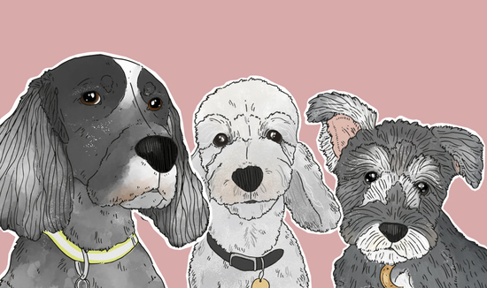 illustrated dogs by Florence and Ottie
