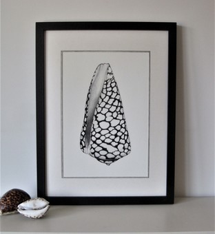 Framed Limited Edition Marble Cone Shell print