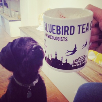 Tea Dog - Arlo!