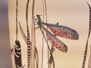 hand illustrated design lampshade Bulrushes insects mayfly