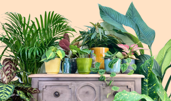 The Ginger Jungle Houseplants