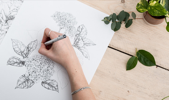 Hand drawn botanicals