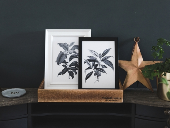 Two A5 Vintage Botanical Illustration Prints
